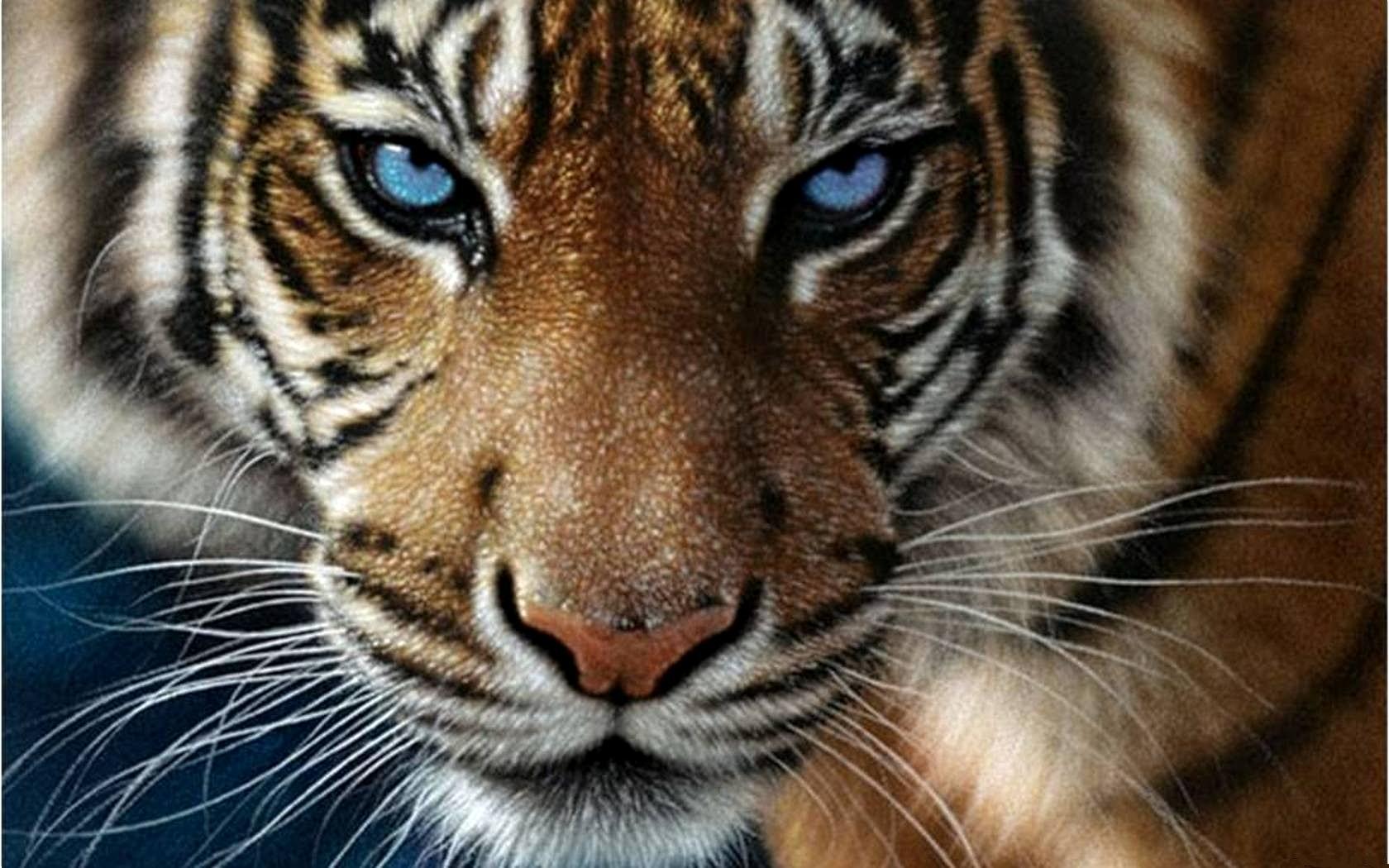 1392144857_tigr