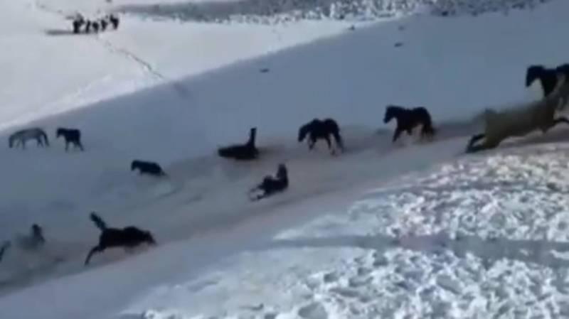 «Как дети малые». Табун лошадей скатывается со снежной горы. Видео