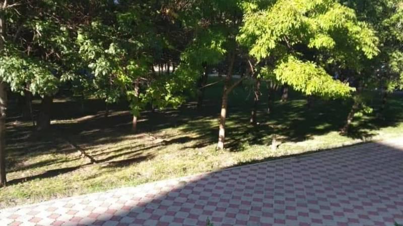 Администратор кафе, чьи сотрудники сушили скатерти в парковой зоне площади Победы, предупрежден
