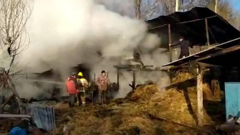 Видео — В селе Талды-Суу сгорел сарай вместе со скотом. Местный житель жалуется на работу пожарной службы