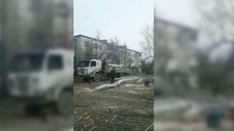 Срубленные в городе Каинды деревья находились в аварийном состоянии, - мэрия