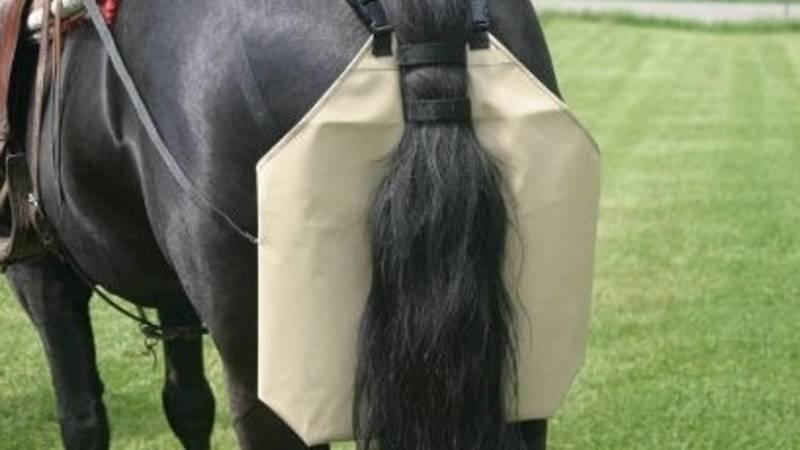 Мэрия Бишкека о патрулировании парков: Решается вопрос о памперсах для лошадей