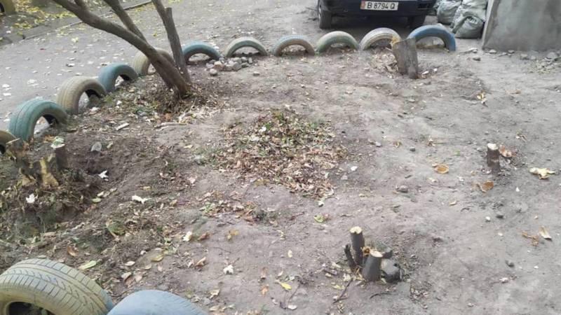 Во дворе дома по ул.Курманжан Датки под корень вырубили деревья, - горожанин