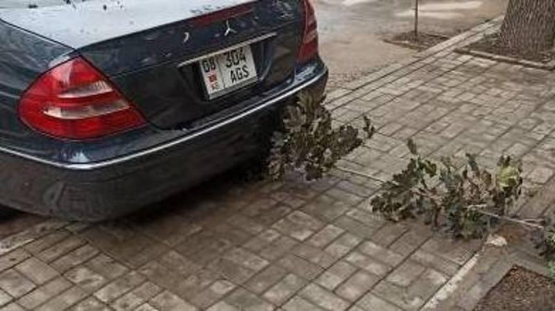 Водитель припарковал свой «Мерседес 210D», переехав молодой саженец. Фото