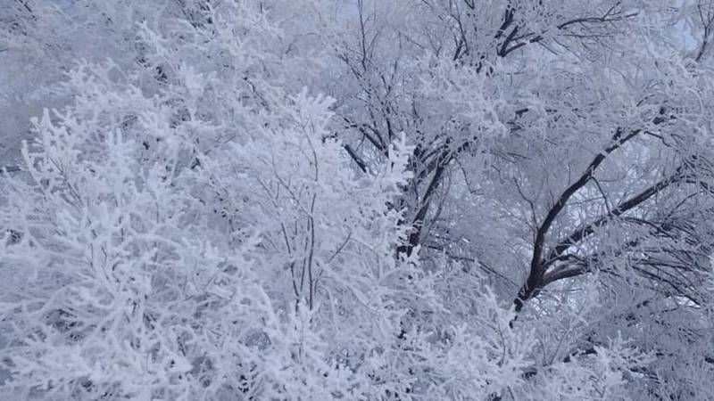 Зимняя красота в Чалдоваре