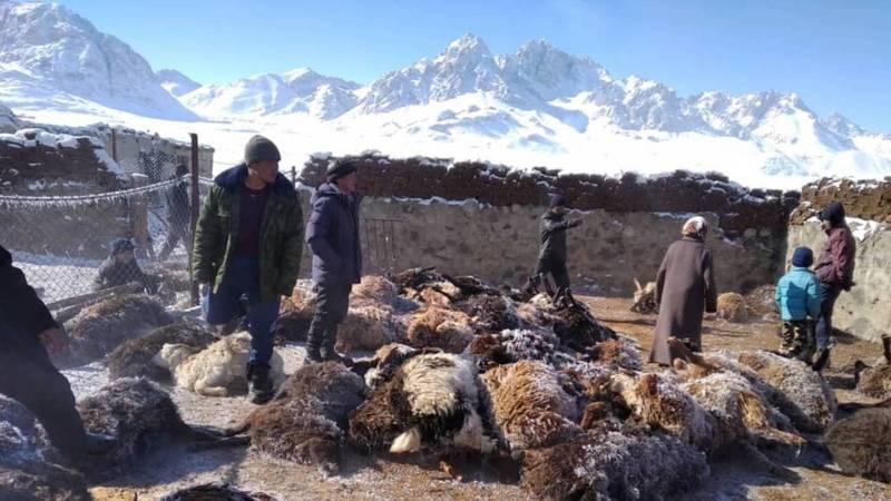 Этнические кыргызы, проживающие в Таджикистане, охотятся на волков, которые нападают на скот. Видео