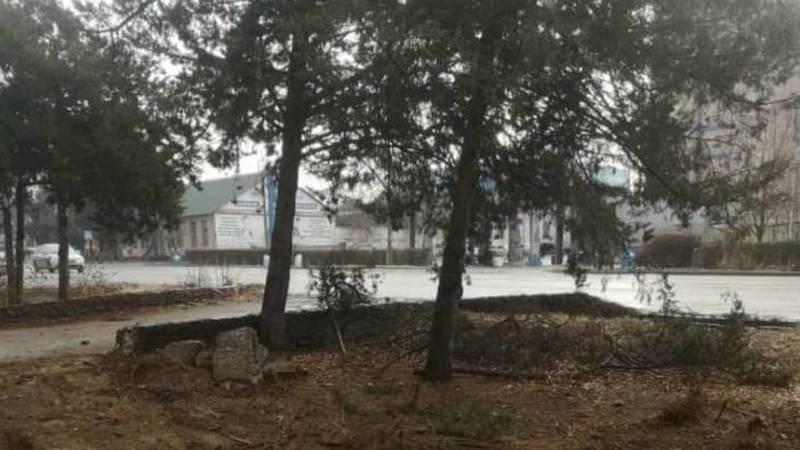 Деревья на Медерова на месте и не пострадали, - мэрия. Фото