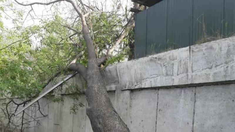 На Фучика дерево упало на забор. Фото