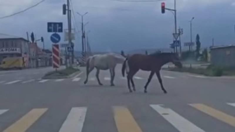 Лошади гуляют по Южной магистрали. Видео
