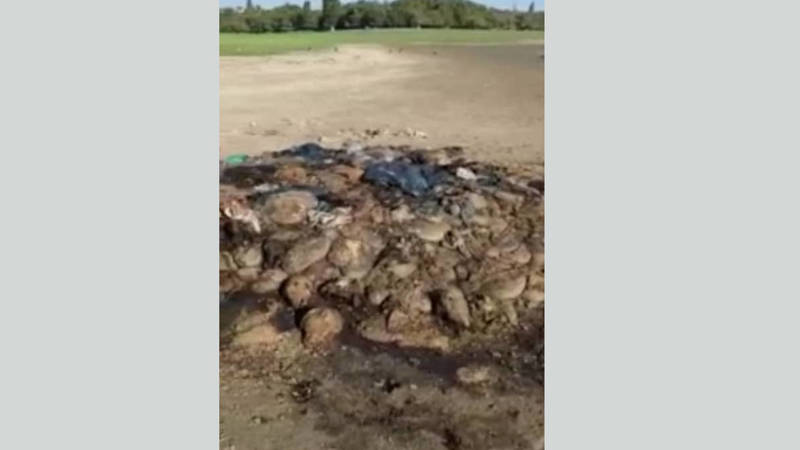 На Ала-Арчинском водохранилище выбросили внутренности скота. Видео