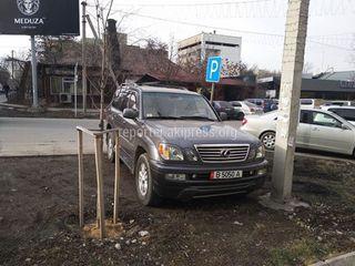 Парковка на газоне госномер: B5050A