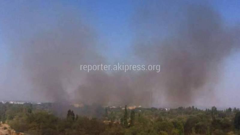 В Ботсаду произошел пожар (фото)