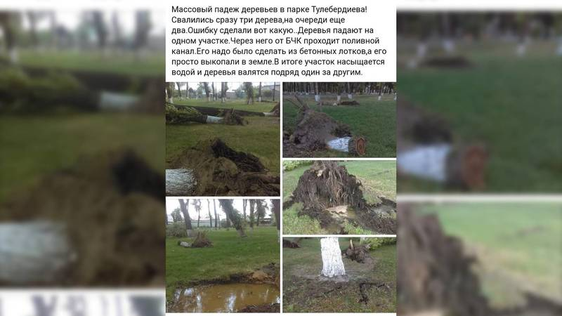 В новом парке имени Тулебердиева упали 3 дерева. Фото очевидца