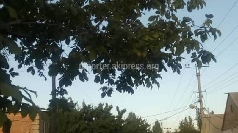 «Деревья проводам не мешают», - житель села Аламедин просит работников РЭС не срезать ветки