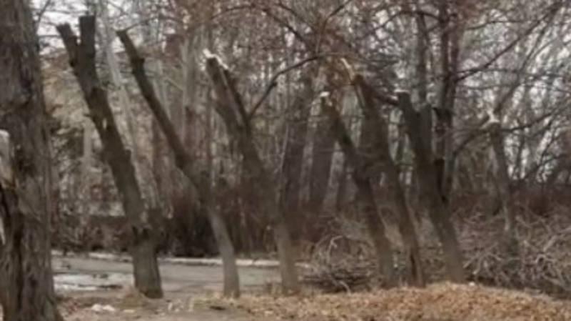 Почему на ул.Анкара обрубили деревья? - горожанин