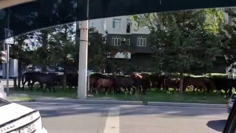 В Асанбае табун лошадей переходит дорогу по пешеходному переходу. Видео и фото