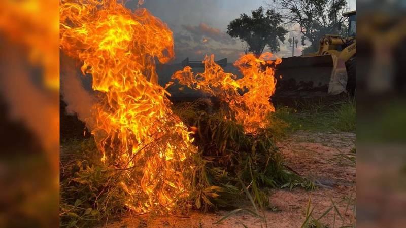Сотрудники СБНОН сожгли коноплю, которая росла на 2 сотках возле парка «Балалык»