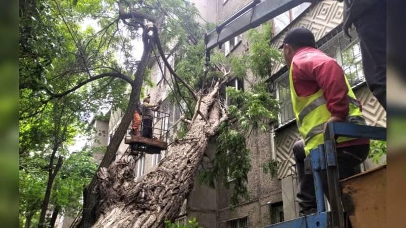 Упавшее на улице Чокморова дерево убрали