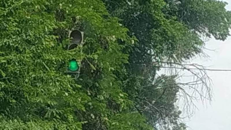 Загараживающие светофор ветки на Медерова уберут в течение недели