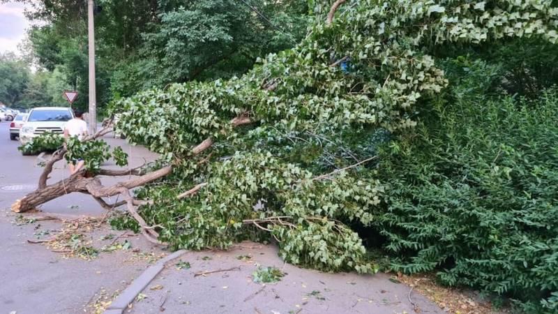 В Бишкеке из-за сильного ветра упали деревья и сломались ветки. ФОТО