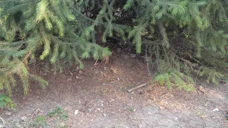«Тазалык» убрал мусор на Старой площади, который был «спрятан» под деревьями. Фото