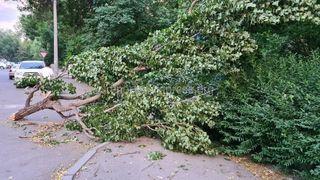 Ветка упала на улице Чокморова