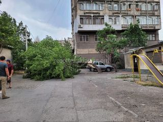 Абдырахманова-Московская