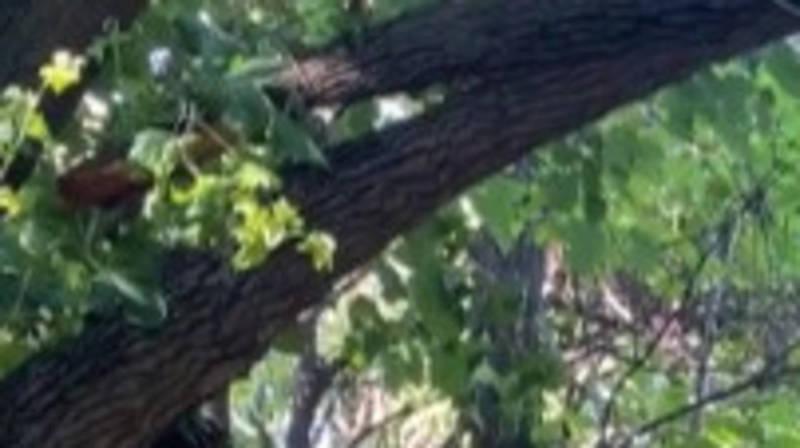 В парке имени Ататюрка ветка может упасть на прохожих, - горожанин