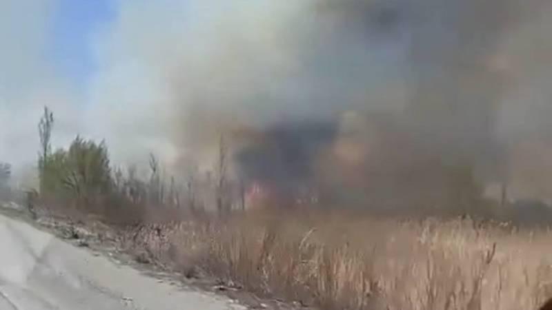 На объездной дороге возле Токмока горит лесополоса. Видео