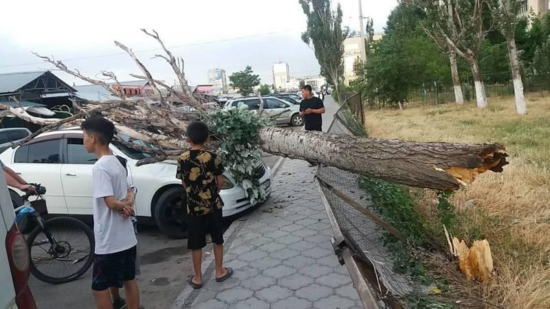 Последствия сильного ветра. Разбитые машины