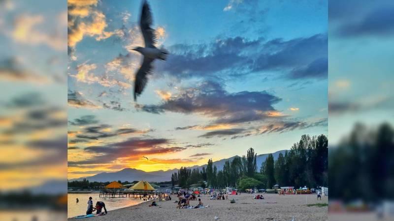 Чайки на фоне красивого заката на берегу Иссык-Куля. Видео, фото