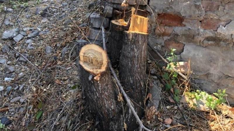В школе №44 спилили живые деревья, - горожанин (фото)