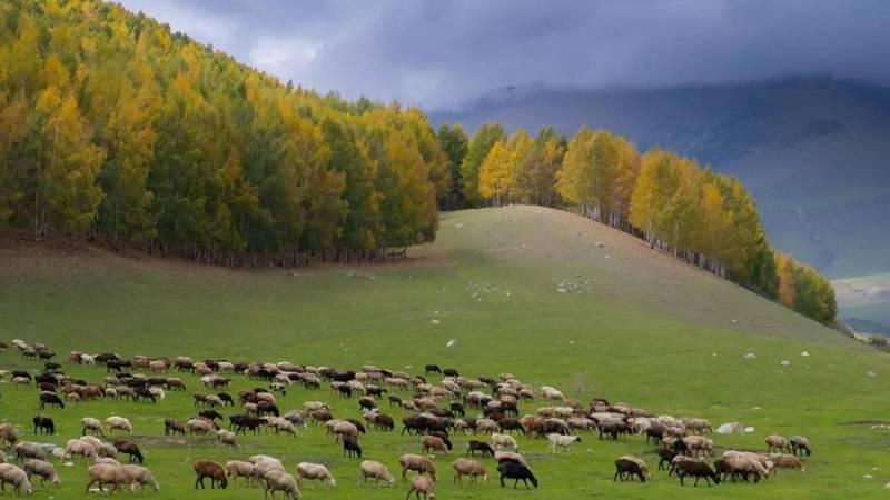 Красота осени в селе Кырчын. Фото