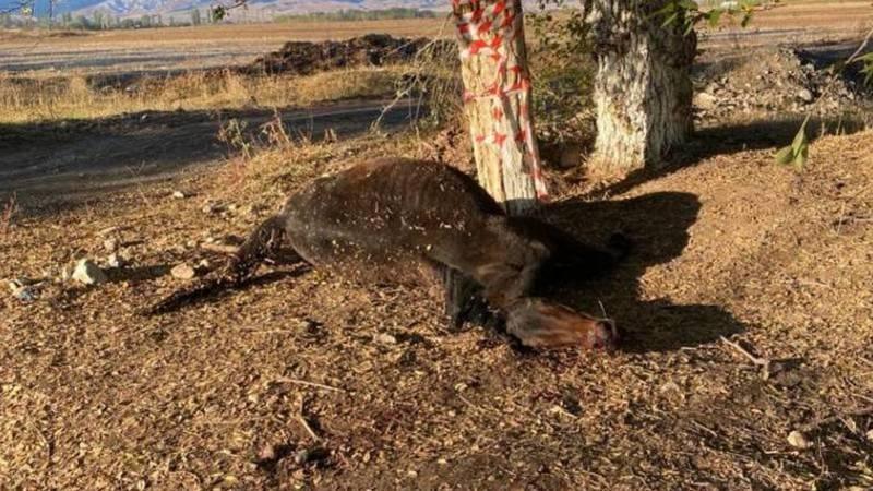 В Воронцовке сбили лошадь, труп все еще лежит на обочине. Фото местного жителя