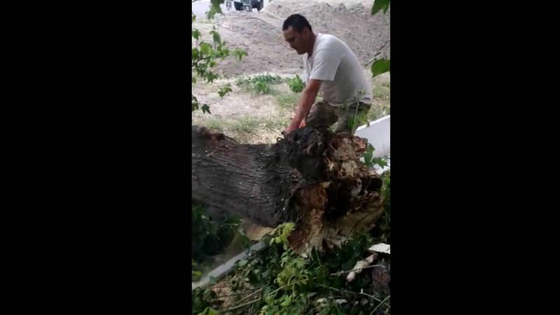 На улице Логвиненко упавшее дерево было убрано