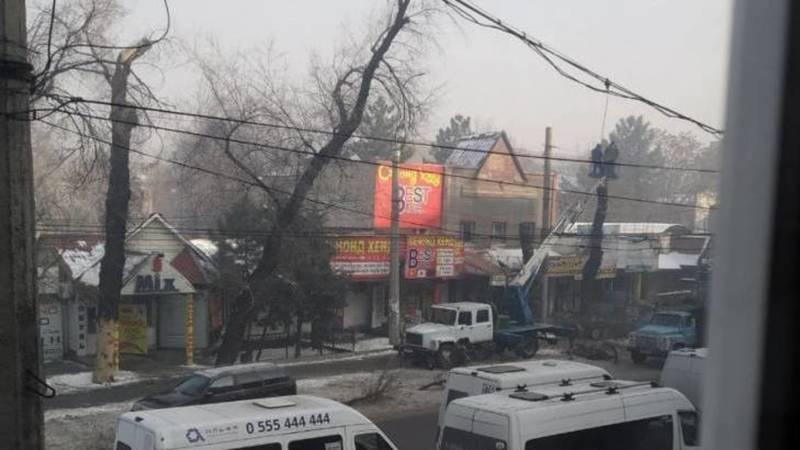 Зачем на Киевской пилят ветки деревьев и оставляют голый ствол? - горожанин