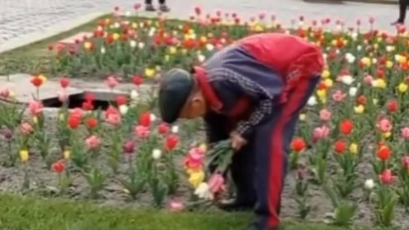 Средь бела дня мужчина сорвал охапку тюльпанов на аллее возле Филармонии. Видео