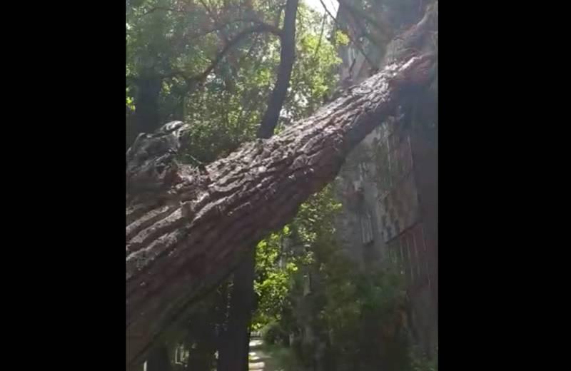 На улице Чокморова упало дерево