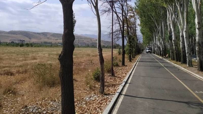 Вдоль велодорожки по Айтматова вырубили засохшие деревья. Фото