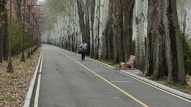 Вдоль велодорожки по проспекту Айматова нет урн. Фото