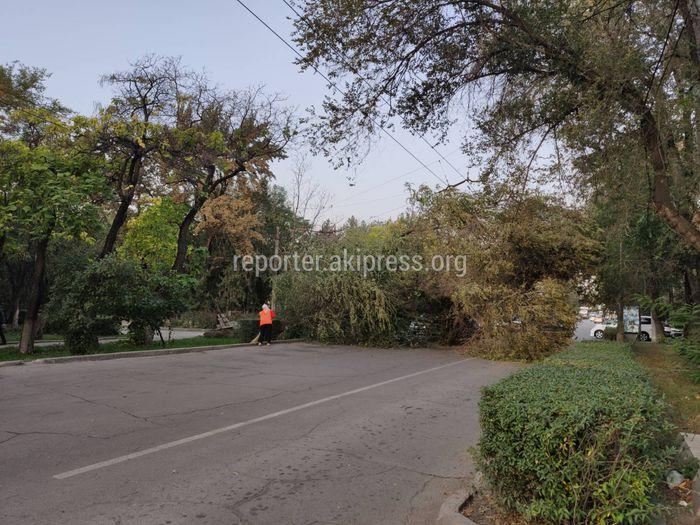 Упавшее дерево на улице Московской близ сквера Тоголока Молдо