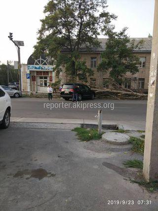Упавшее дерево на Манаса-Боконбаева