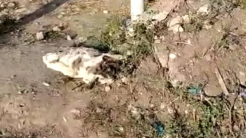 На ул.Садырбаева лежит труп собаки, который никто не убирает уже 5 дней. Видео