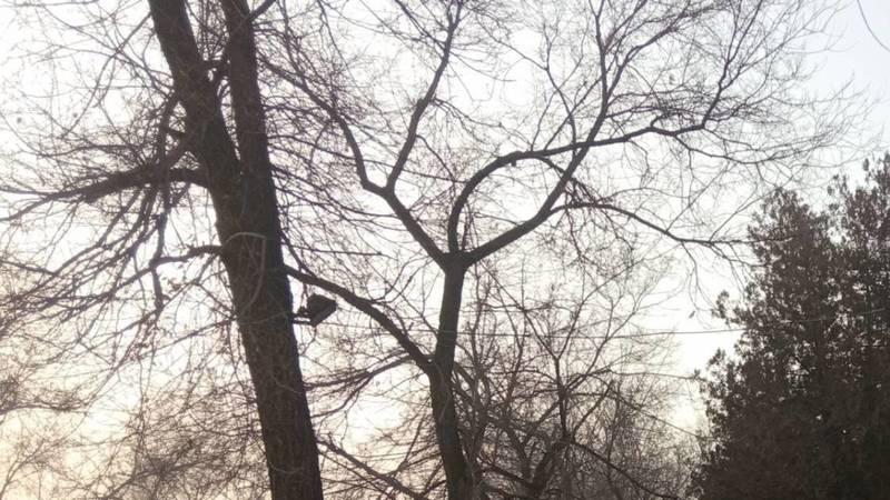 Возле консерватории им.Молдобасанова фонарь прибили к дереву, - горожанин