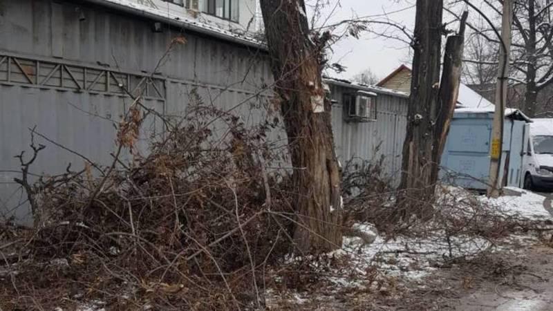 Бишкекчанин просит убрать ветки, оставшиеся после вырубки. Фото
