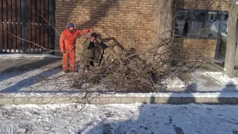 «Бишкекзеленхоз» убрал ветки на Некрасова, оставшиеся после вырубки. Фото