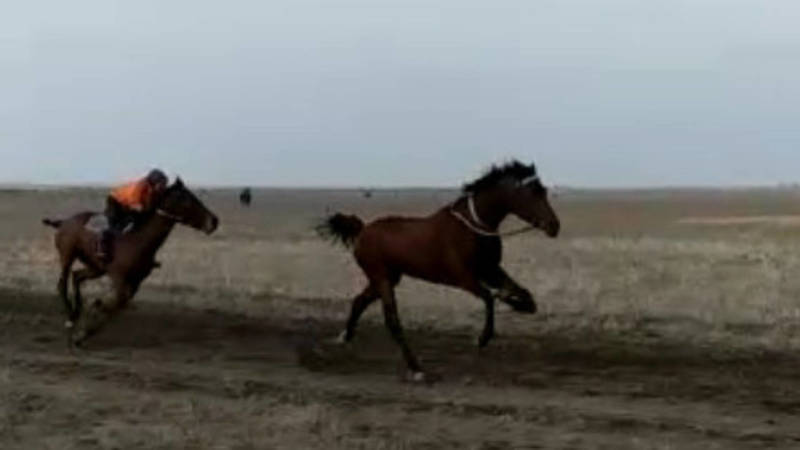 Во время скачек лошадь сломала ногу. Видео