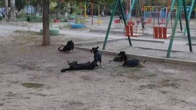 В Юг-2 на детской площадке бегают бродячие собаки. Фото