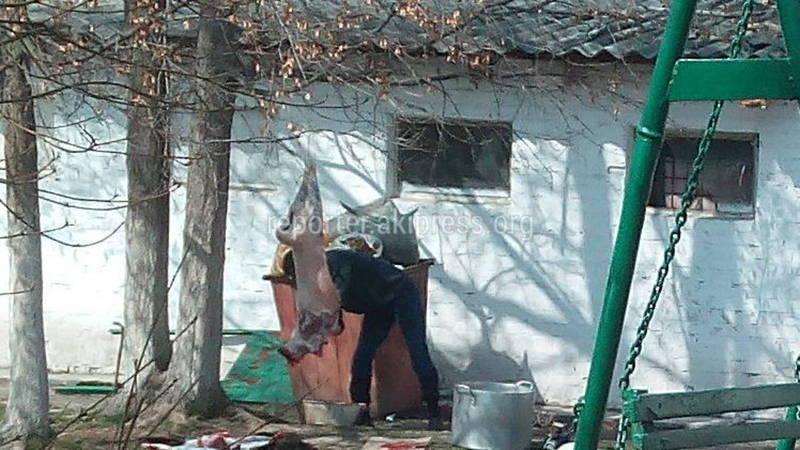 В 7 мкр на территории школы-гимназии №20 разделывали барана (видео)