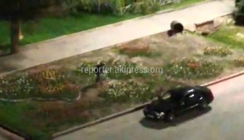 Очевидец снял на видео, как неизвестный ворует тюльпаны на площади Ала-Тоо. Когда было снято видео - неизвестно